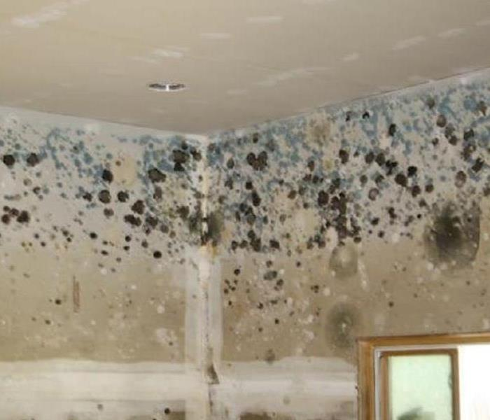Mold Remediation Does Your St. Cloud Home Have A Mold Problem?