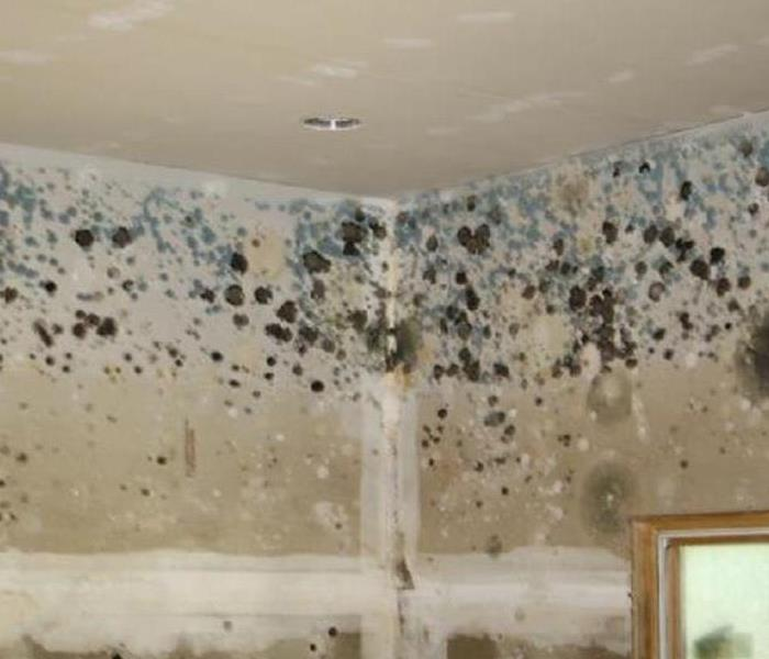 Mold Remediation Worry about mold in your home?  Call SERVPRO of St. Cloud!