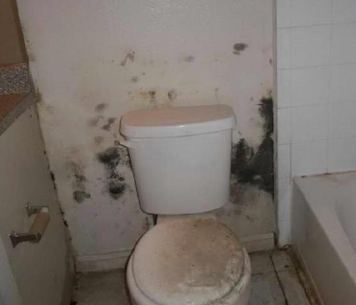 Mold Remediation Mold can be found in your bathroom!  Call SERVPRO of St. Cloud for help!