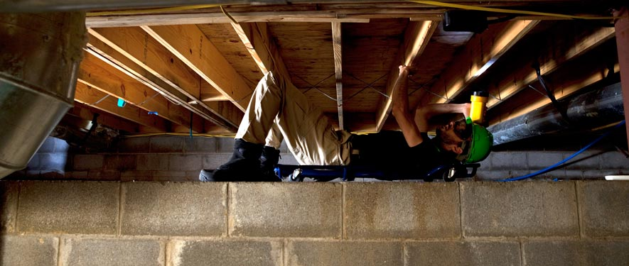 St. Cloud, MN mold removal